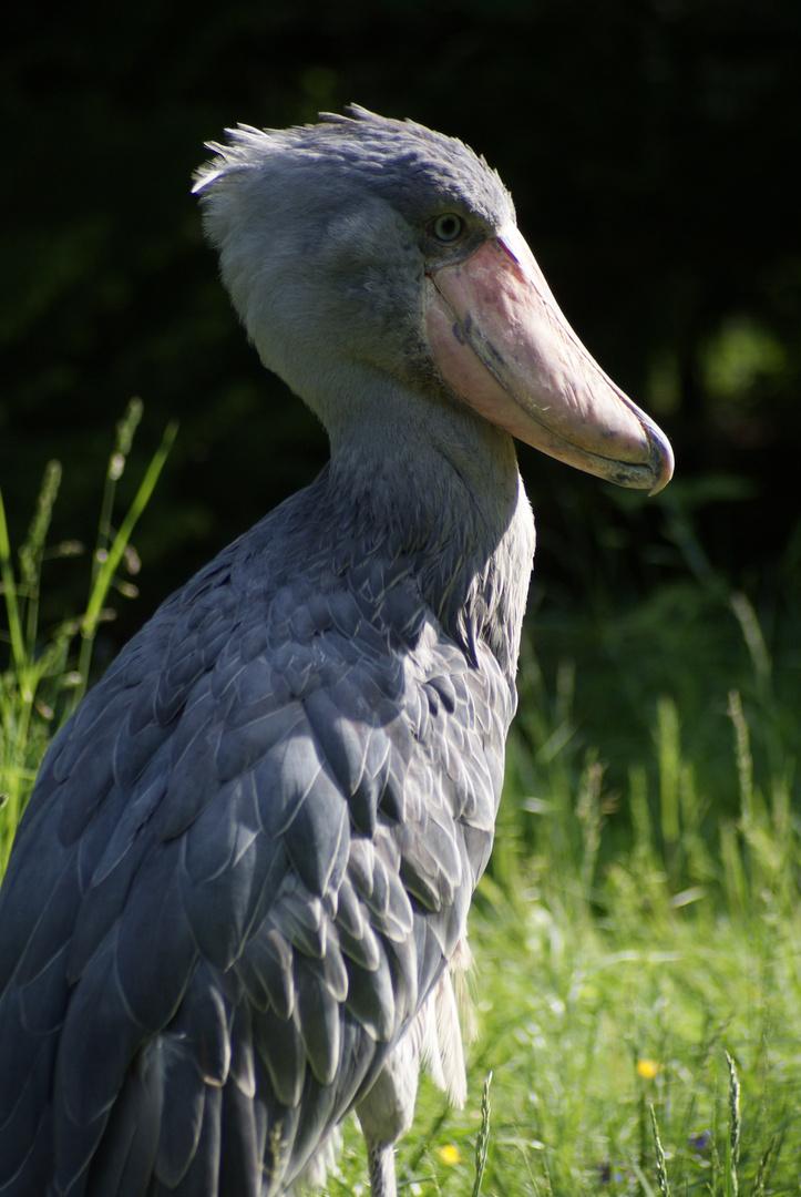 Vogel-Park Walsrode