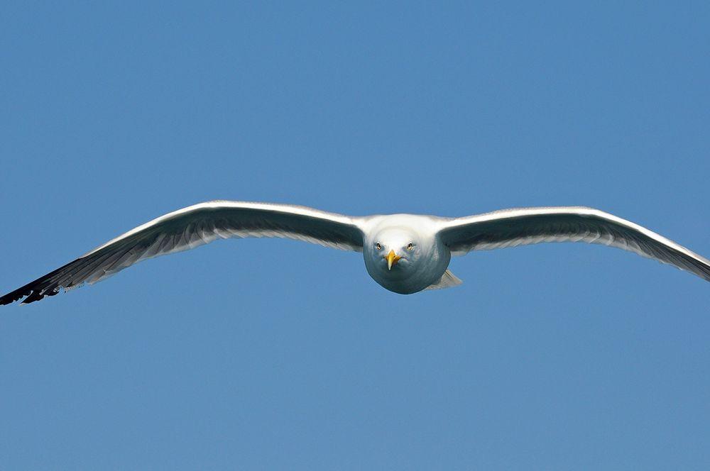Vogel - Perspektive