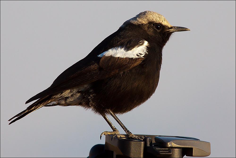 Vogel-Stativ