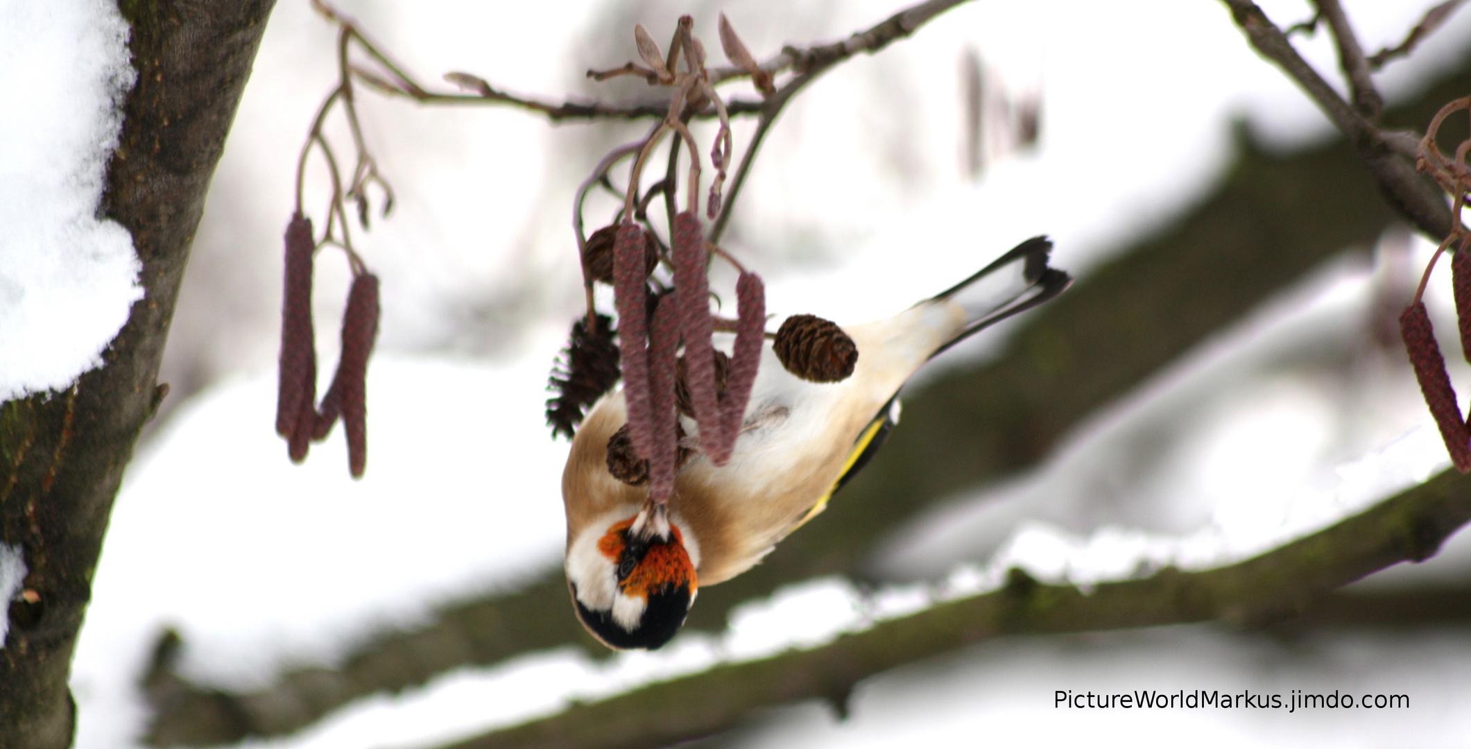 Vogel sucht Futter :)