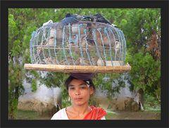 Vogel - Verkäuferin