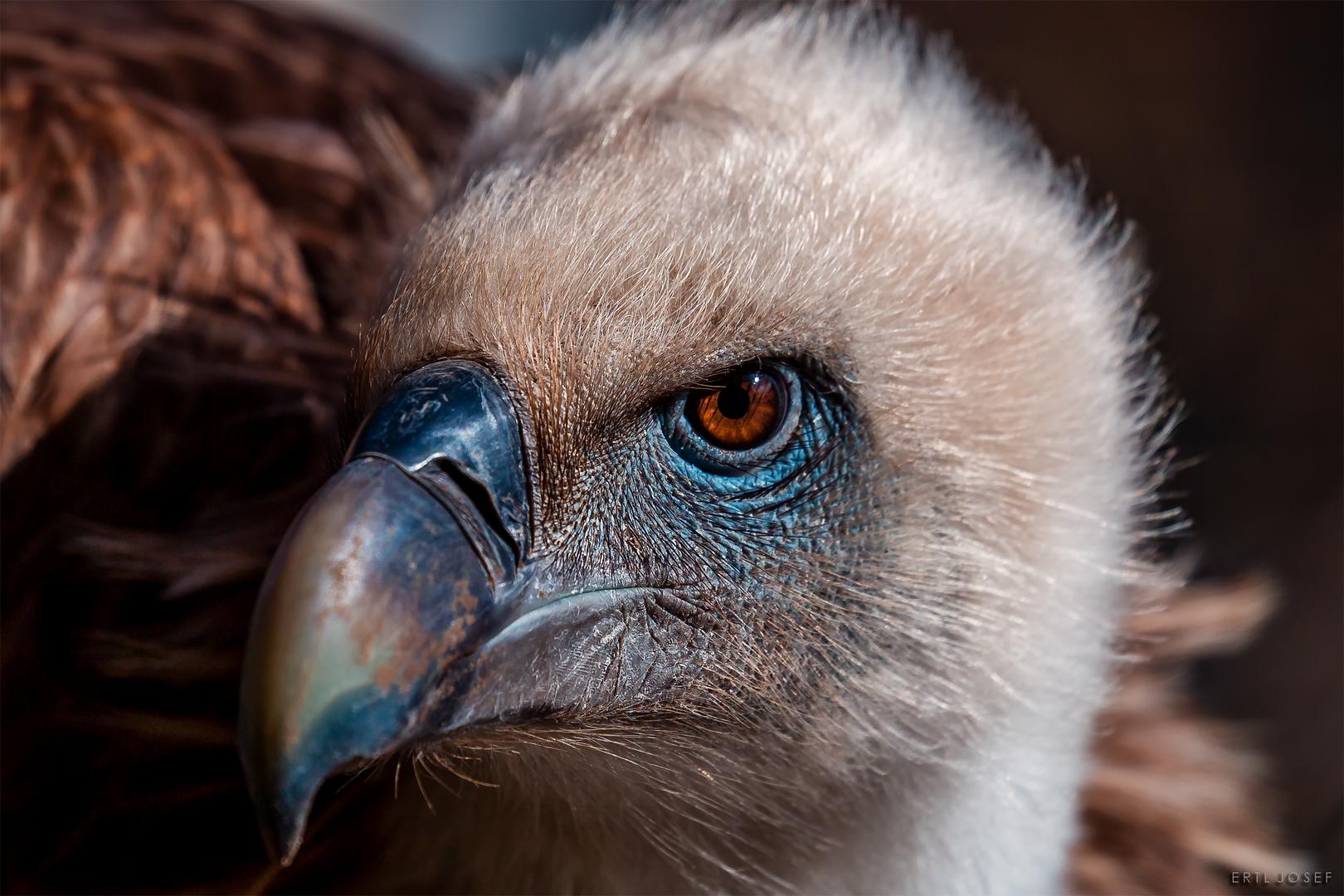 Vogel0052