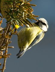 Vogelakrobatik