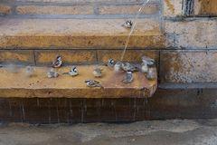 Vogelbad in Jaisalmer