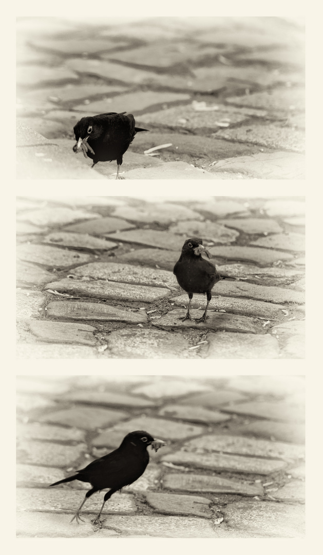 Vogelcollage