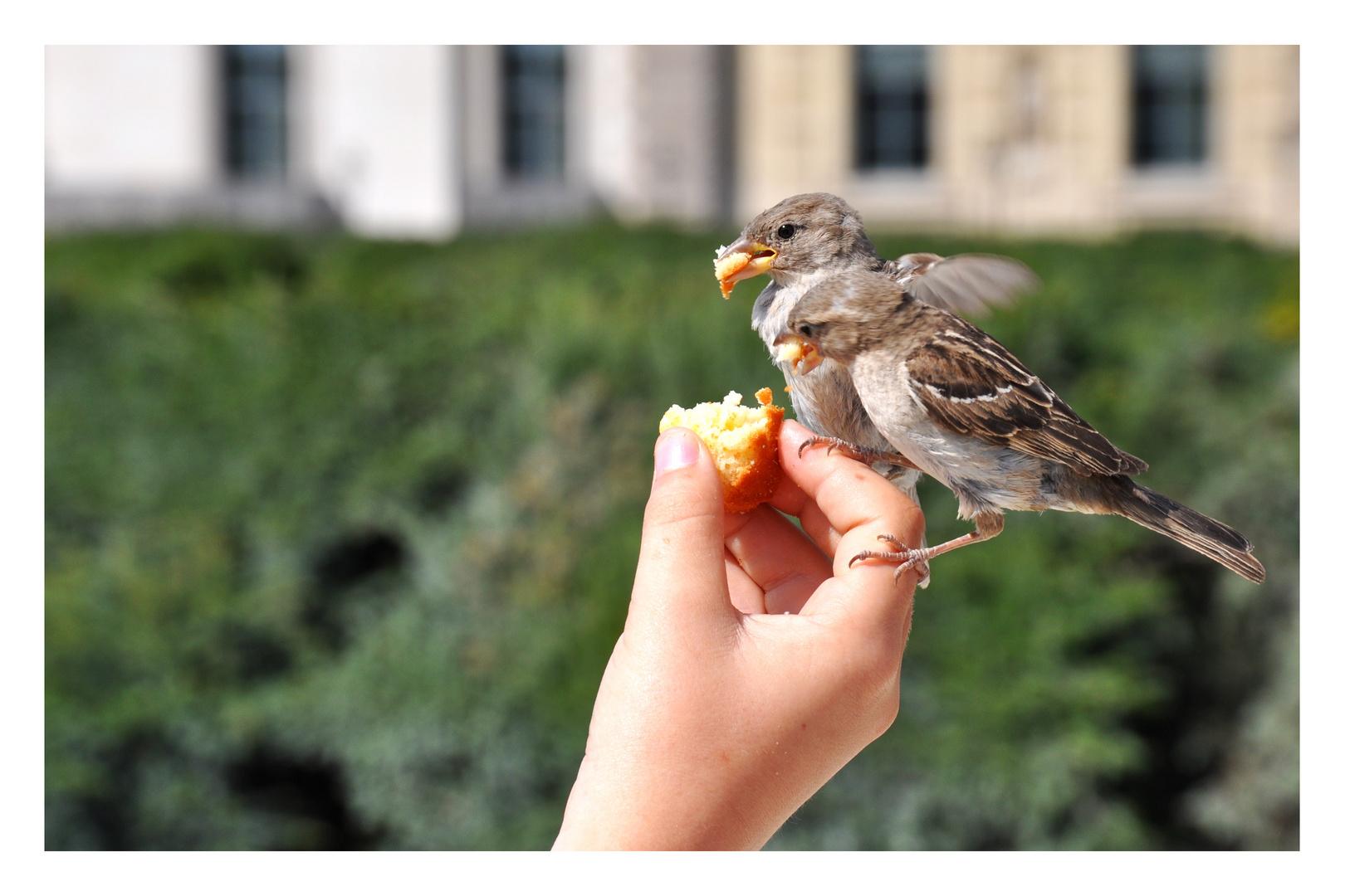 Vogelfütterung im Park