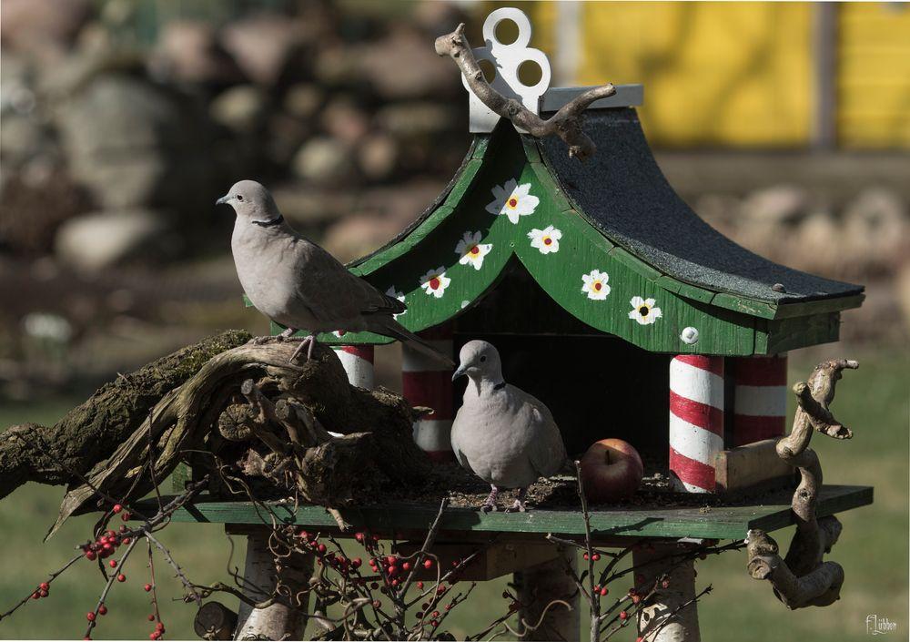Vogelfutterhaus  nicht nur für Tauben
