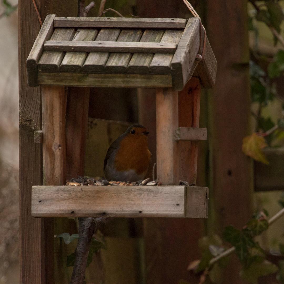 Vogelhausbesucher