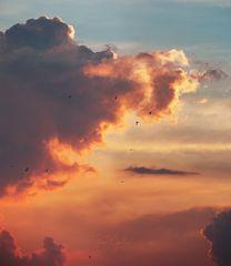 Vogelhimmel in orange