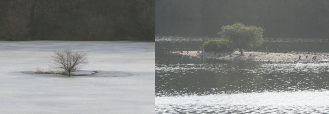 Vogelinsel Mechower See