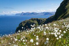 Vogelinsel Runde, Norway