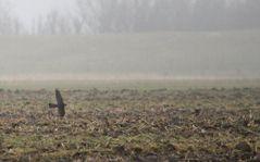 Vogeljagd im Mieselregen