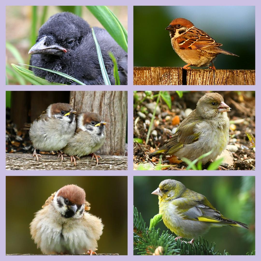 Vogelkinder