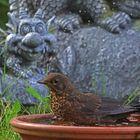 Vogelkinder-Planschbecken