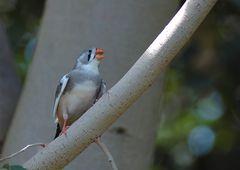 Vogelkonserve :-)