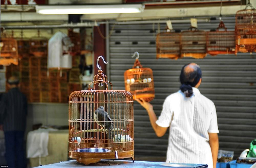 Vogelmarkt, Hong Kong