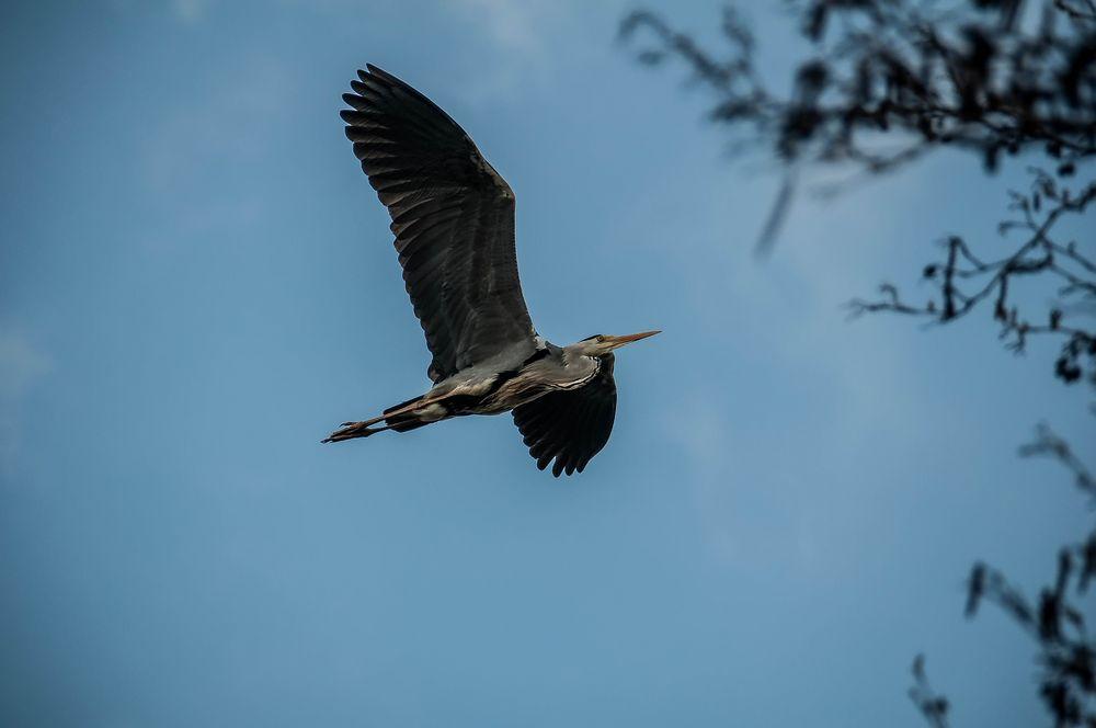 Vogelparadies Bramfelder See