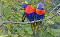 vogelpark marlow einfach nur hammermegageil