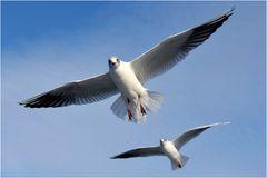 Vogelperspektive #2