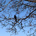 Vogelperspektive