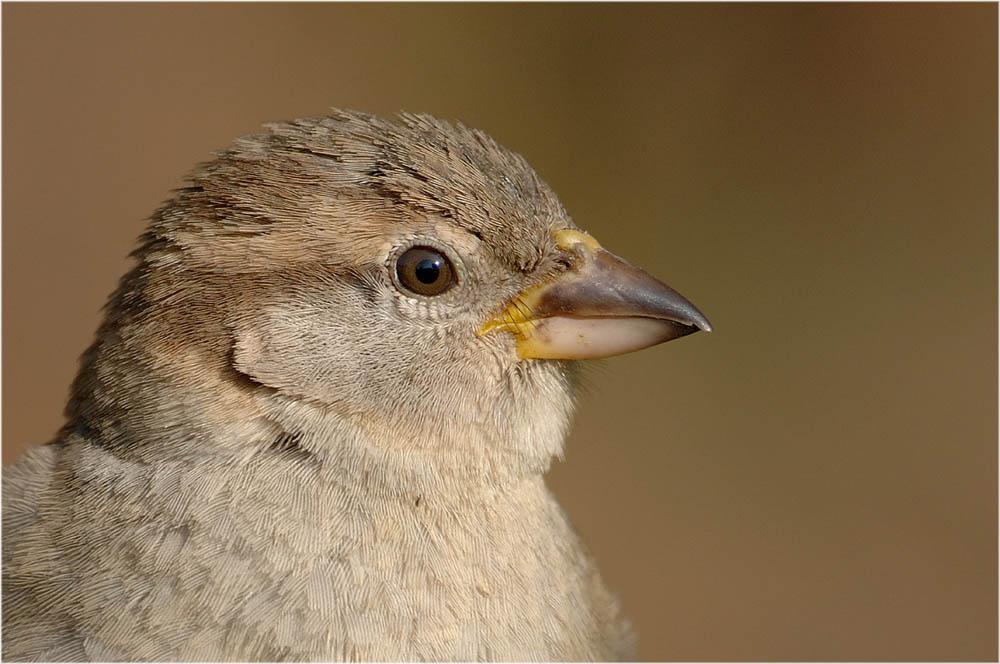 Vogelportrait