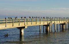 Vogelpromenade