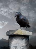 Vogelscheuche für Charito :)