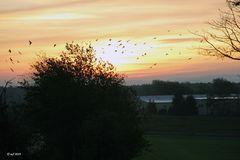 Vogelschwärme im Sonnenlicht