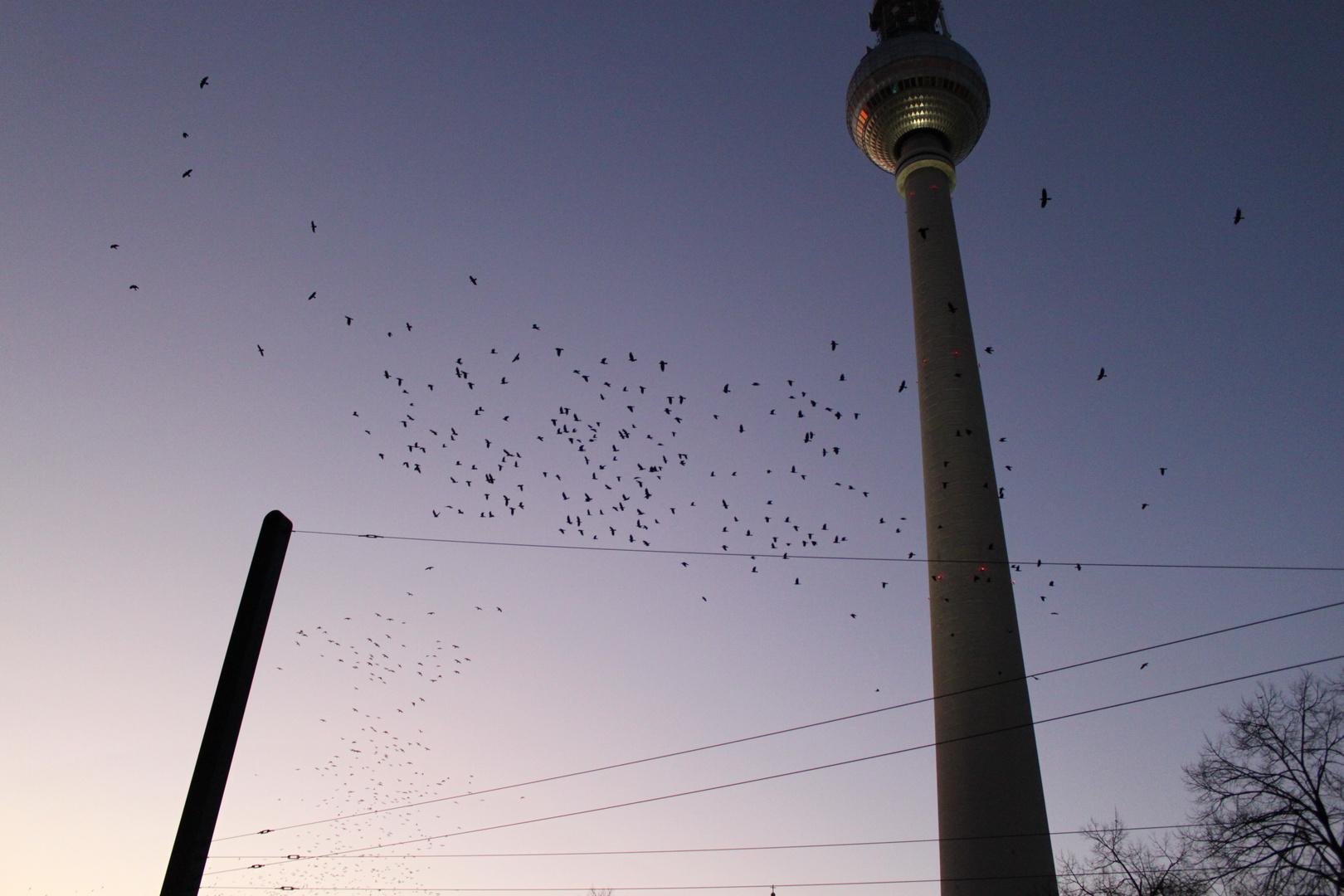 Vogelschwarm am Alex