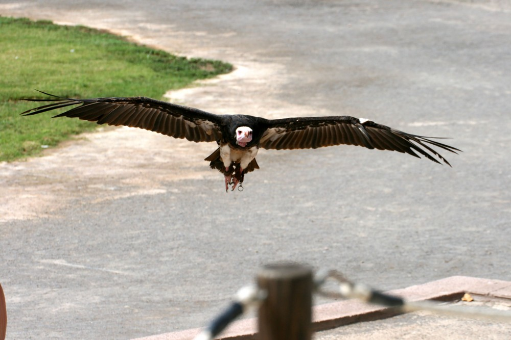Vogelshow im Junglepark in Tenerifa