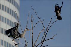 """Vogelstreit um die """"Stadtwohnung"""""""