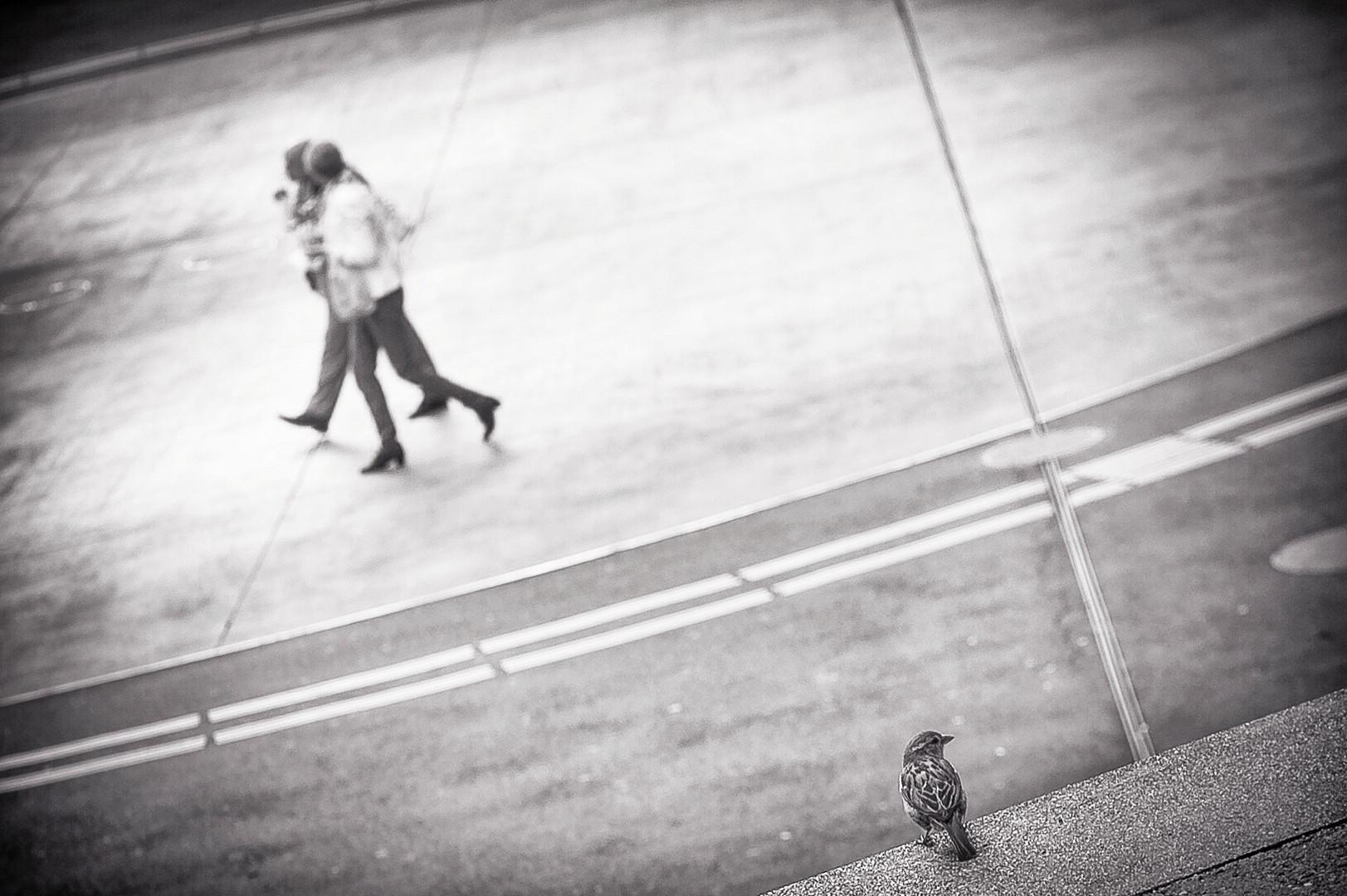 vogelstudie