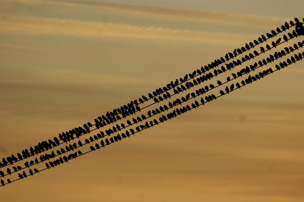 Vogelversammlung