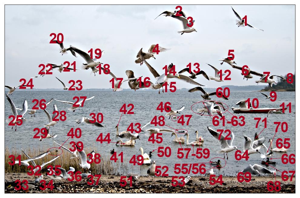 Vogelzählung (72)