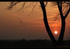 Vogelzug, der Sonne entgegen .....
