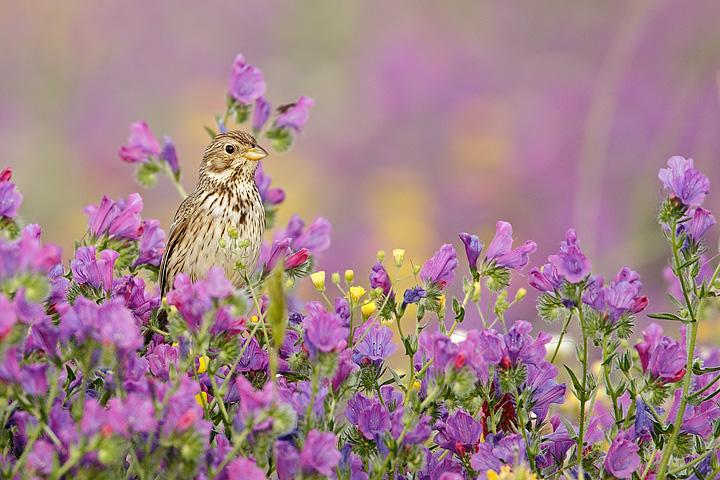 Voglia di primavera foto immagini animali uccelli allo - Primavera uccelli primavera colorazione pagine ...
