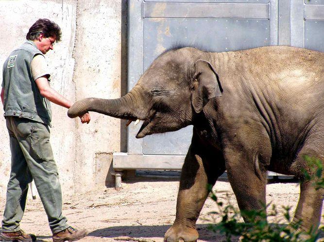 Voi Nam Will Spielen Foto Bild Tiere Zoo Wildpark Falknerei