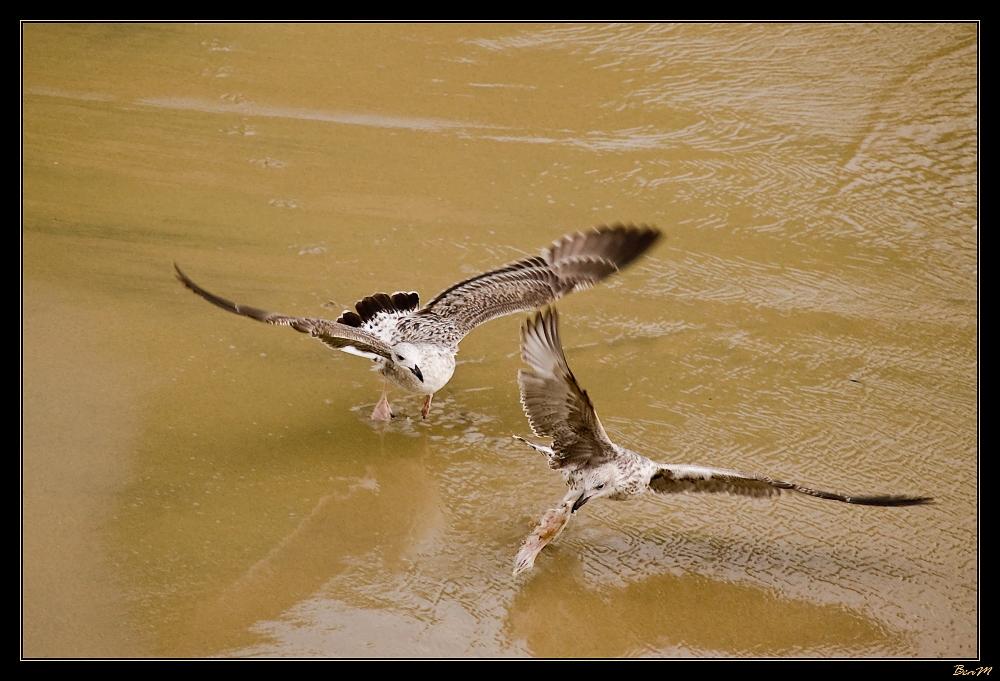 Vol à la tire... d'aile