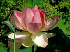 Vol au-dessus d'un Lotus!!!