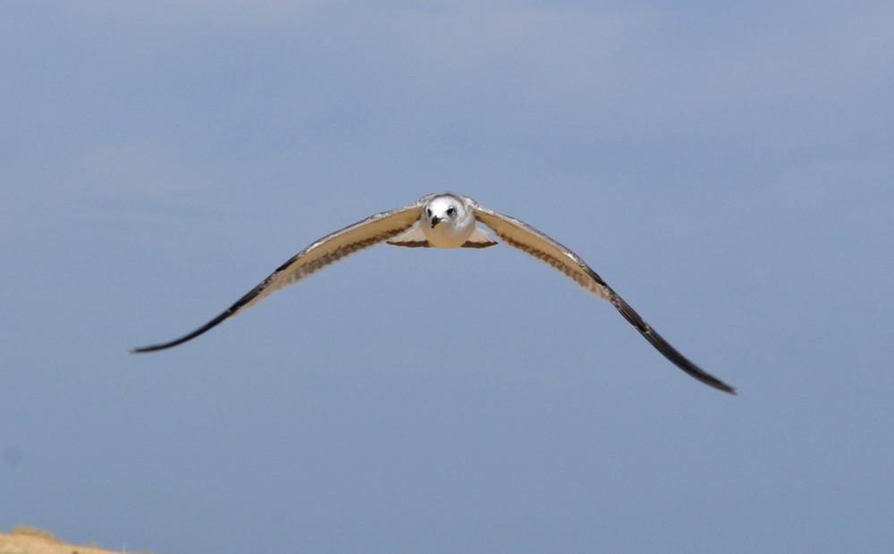 vol d'approche