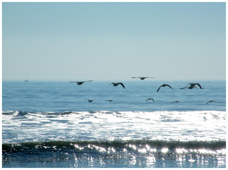 Vol d'oiseaux (Version 2)