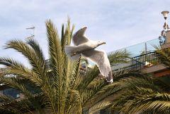 Volando por Palma de Mallorca