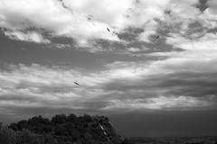 Volando sobre nosotros / Fliegen oben auf uns