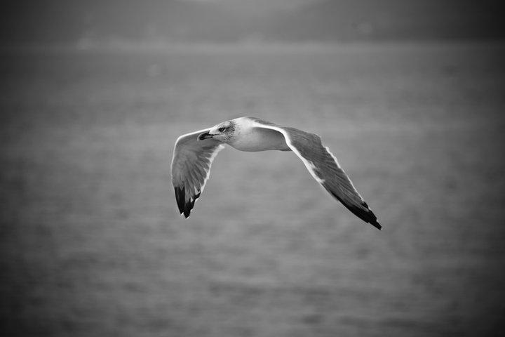 Volare!
