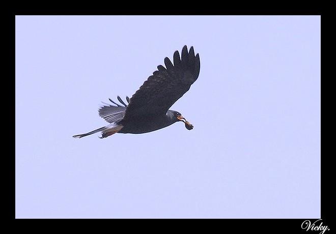 Volare lontano...e per sempre...