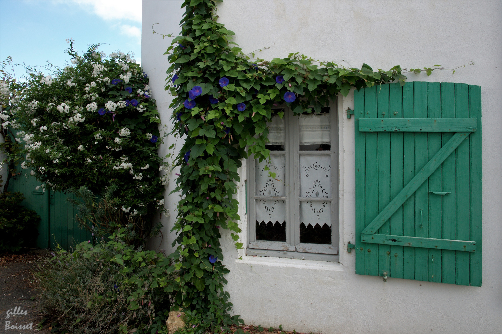 volet de bois vert photo et image | europe, france, architecture Images fotocommunity