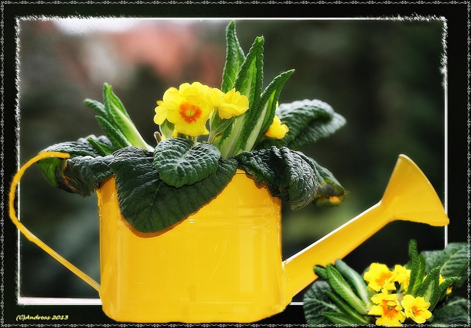 Volle Kanne Frühling
