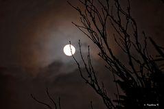 Vollmond am 30. 11. 2012 - rechtzeitig zum Advent