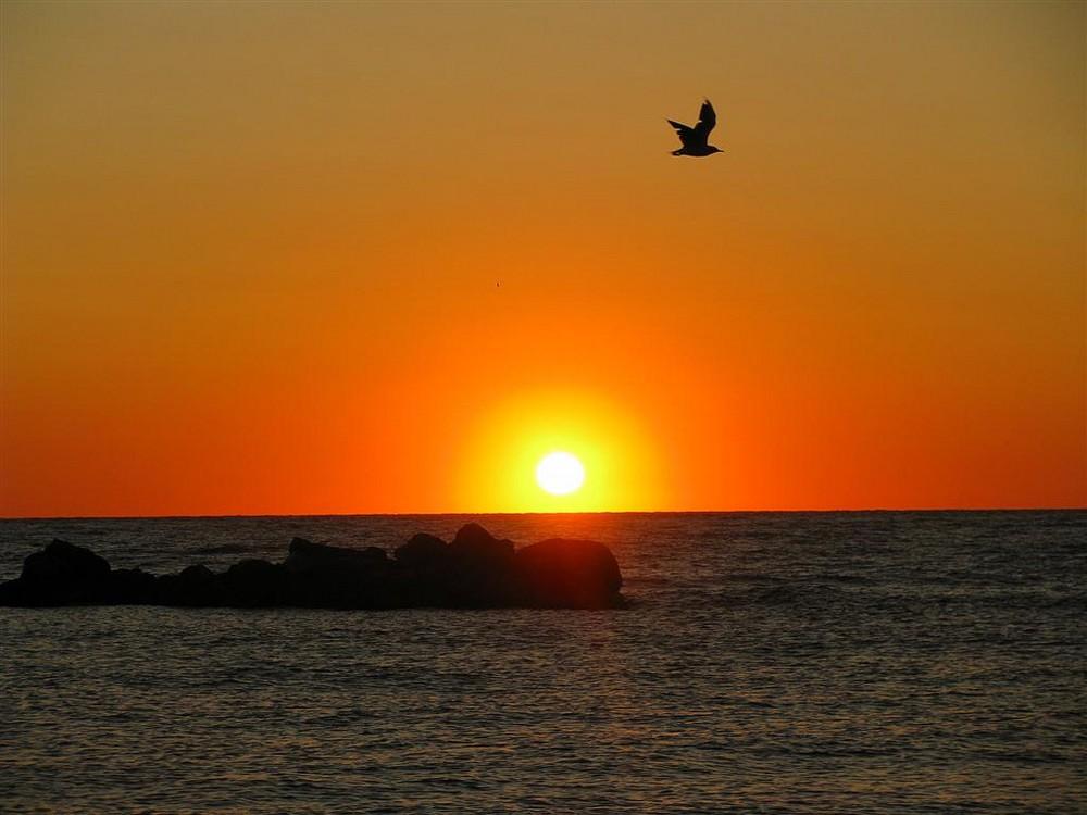 Volo ad alba