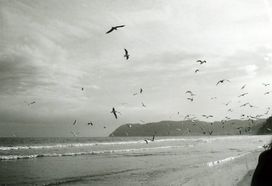volo di gabbiani